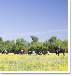 Cowboy Territory Job Link